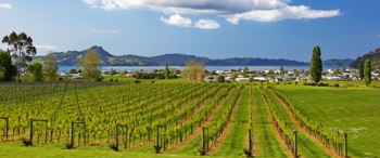 Lobely bay Vineyard
